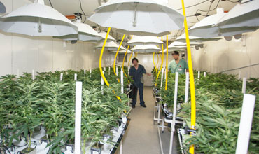 Inside Grow Facilities